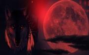 new.moon.wolf