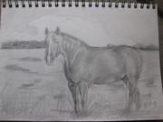 my drawing of Dakota