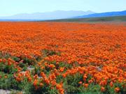 Springtime in Southern California