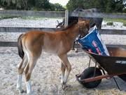Brandi checking an empty feedbag
