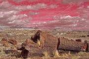 AZ, Petrified Forest, Rainbow Forest, The Long Logs 4a + hue 137