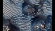 Two Generations of Windblown Sediments on Mars