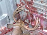 Deer Hunting 14
