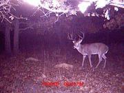 Deer Hunting 54