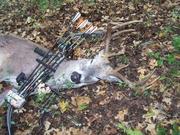 Deer Season (bow) starts!