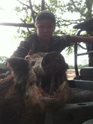 kyles 350lb boar hog with 3 inch cutters killed with knife and dogs at all about u ranch and outfitters 10/2011