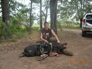 Johnny Boar Bow Kill 3