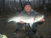 28 inch Schatucket River Greenville Dam Striper