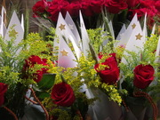 Sant Jordi 2012 002