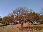 Tree Zoo