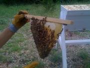 Bee Zoo