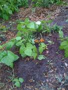 Zoobird Home Organic Gardens