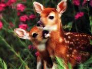 Love and Honor Animals Please!!!