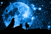 Wolves and Visions