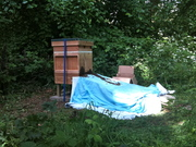 Day 1 @ the Apiary