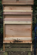 Bee Hives June 11