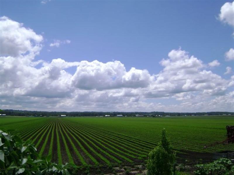 scenic farm 800