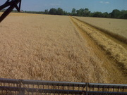 Borszcz Farms Wheat Harvest 2011