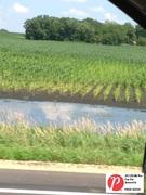 Minnesota Corn 3