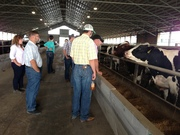 CYL-ers learning about the feed ration of the cattle
