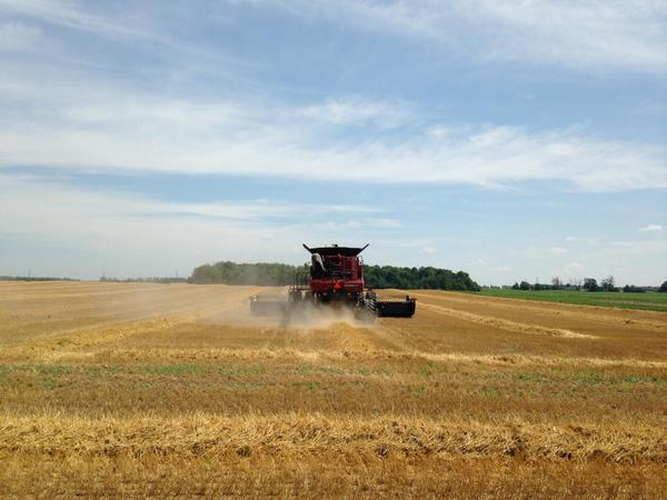 Wheat Harvest First Field Last Row in Huron County