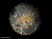 planet_physarum-3