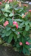 Observacion de diferentes tipos de Hojas, Flores etc