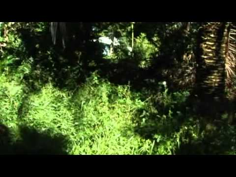 30 Year Old Food Forest