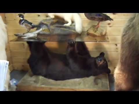 Alaska To Maine Taxidermy At The Sportsmen Show