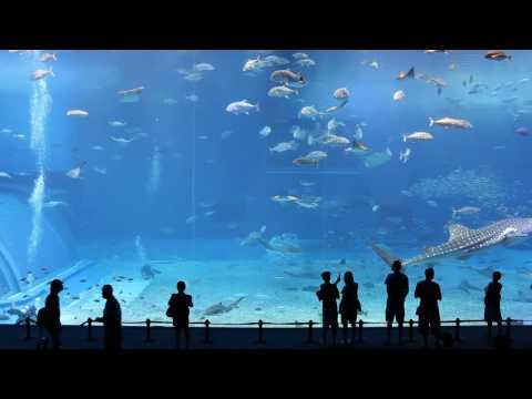 Aquário - segundo maior do mundo.