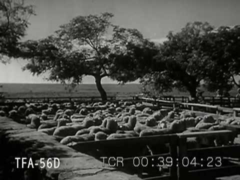 Um passeio pelo Sul em 1942: o Brasil no tempo dos meus pais.