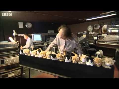 Um órgão de gatos