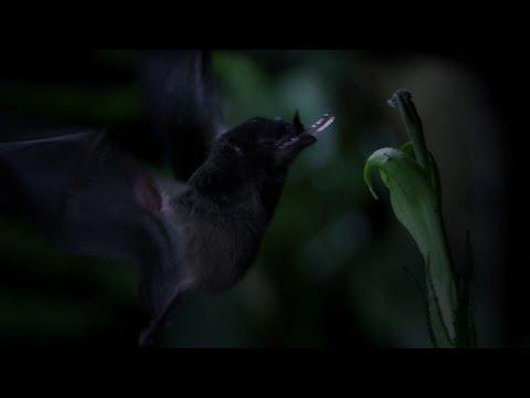 Morcego e flor