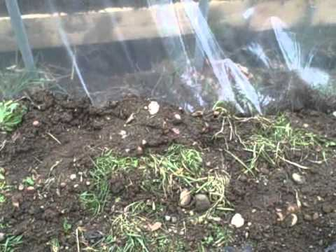 HOW TO: Build an Inexpensive Greenhouse - Update 1