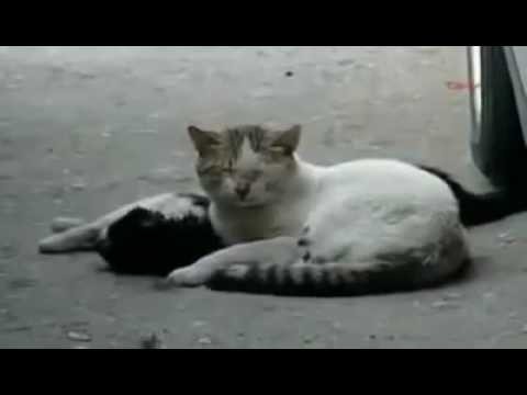 Cat tries to revive dead friend