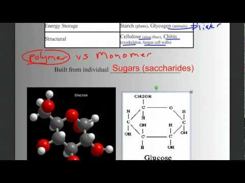 Biomolecules Part 1: Intro, Carbohydrates, and Lipids