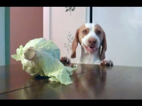 Who said dogs are carnivores?