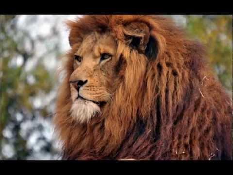 Most Amazing Video: Animals and Nature - Beautiful Planet Earth (in 1080 HD)