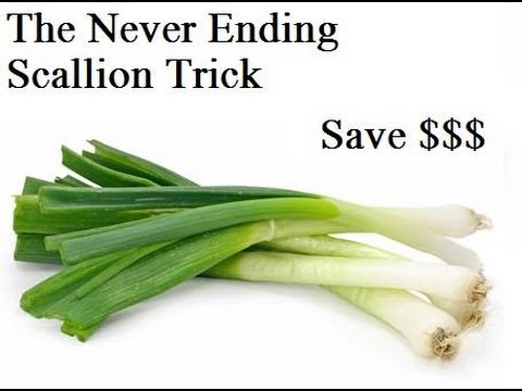 Never Buy Scallions Again: The Never Ending Scallion Trick