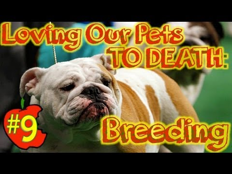 Nugget #9: Loving Our Pets TO DEATH, Pt1: Breeding