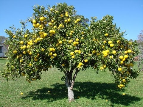 How do I get fully raw organic fruit for free?