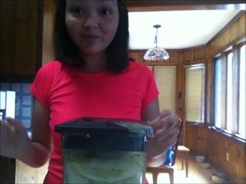 how to make any smoothie a green smoothie