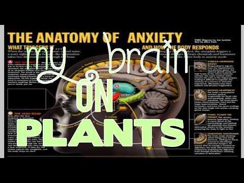 My Brain on Plants Intro