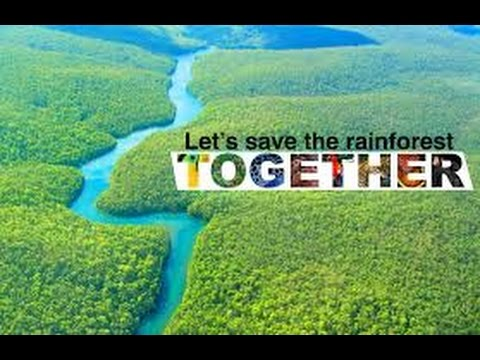 Go Vegan To Save The Amazon Rainforest from Deforestation!