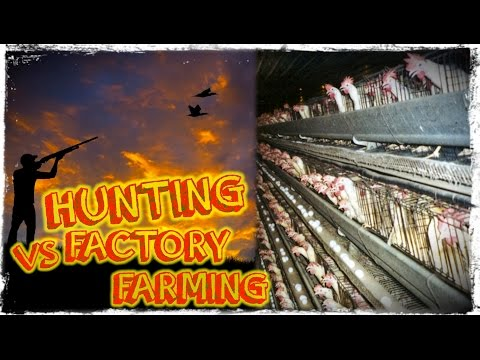Is Hunting Better Than Factory Farming?
