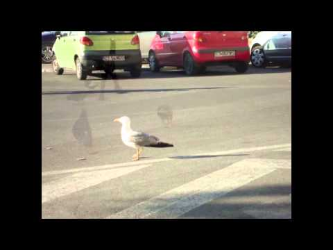 FEEDING PIGEONS AND SEAGULLS | Fruity Adelle
