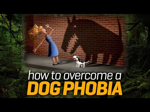 Animal Phobia - how I plan to overcome it