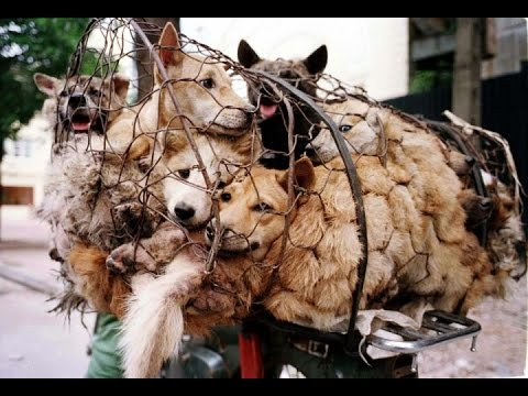 #STOPYulin2015 What's the big deal??