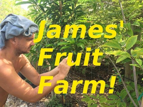 James' Florida Fruit Farm Just 6 Months From Start Up!