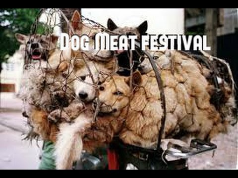 China's dog meat-eating festival 2015